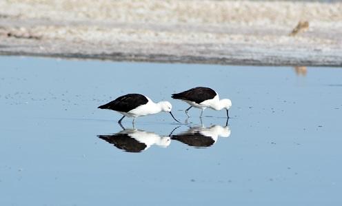 2 black birds