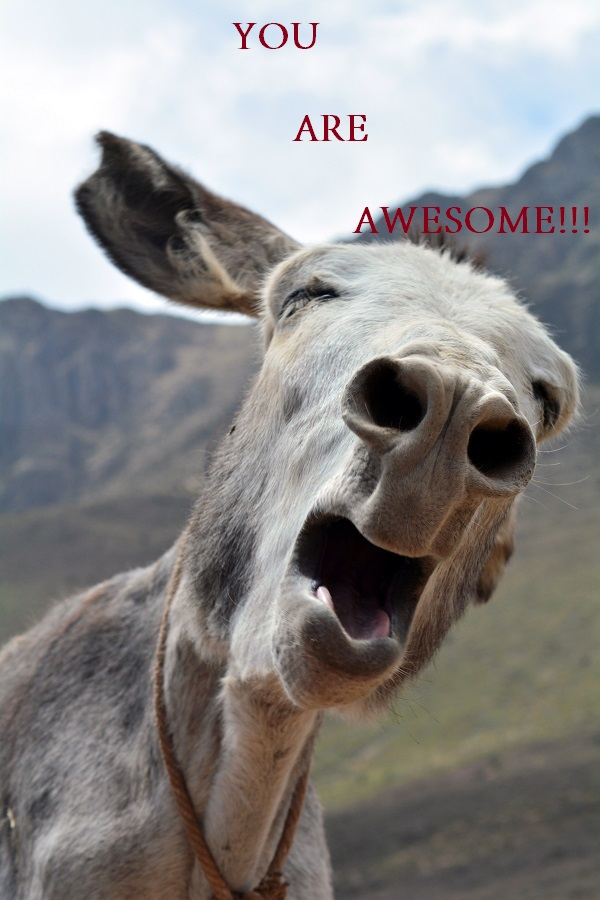 donkey says you are awesome