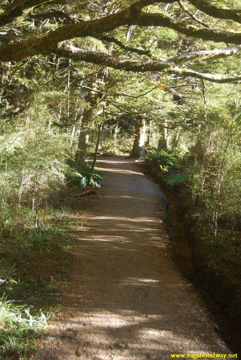 End of hike in Kepler, NZ