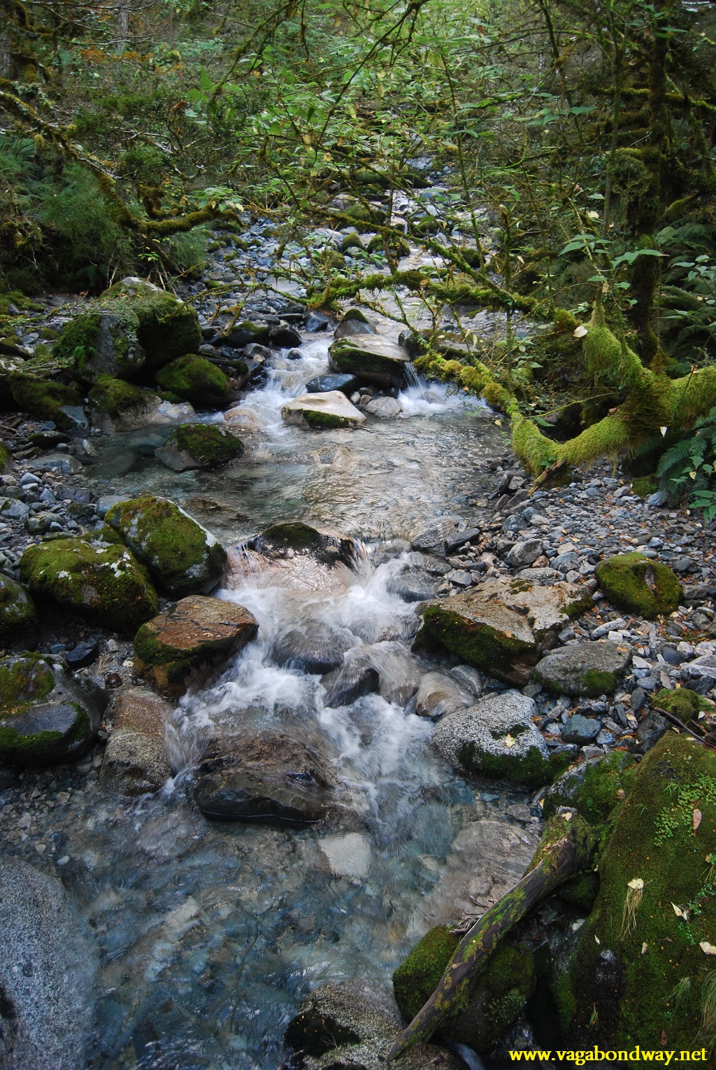 River on Kepler, NZ