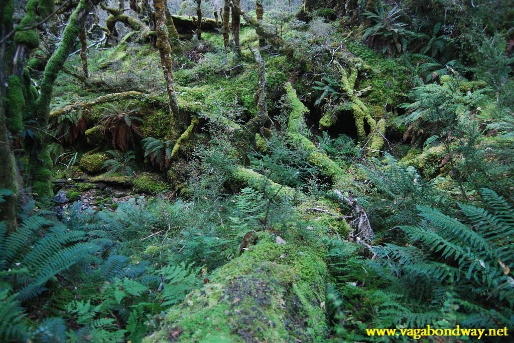 green in Kepler, NZ