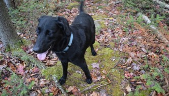 How a Rescue Dog named Millie Helped My Blog