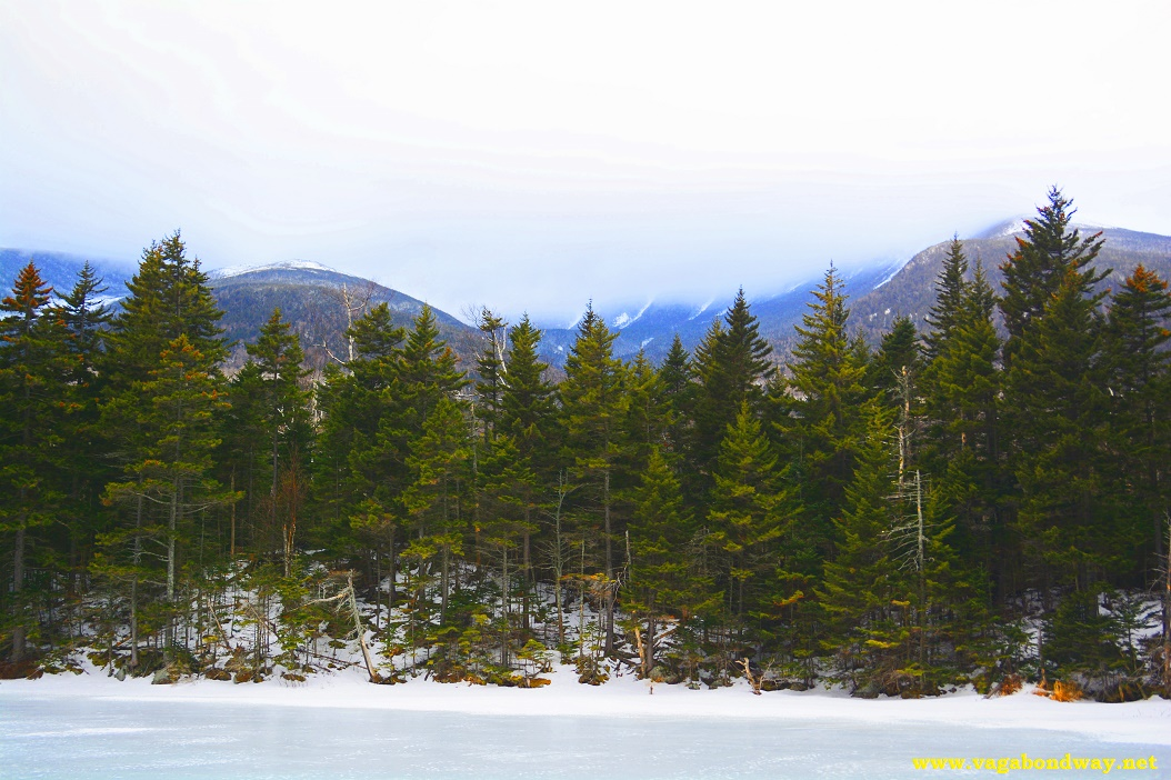 Home Trees in White Mountains NH