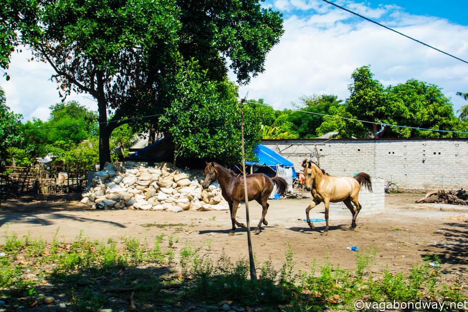 Horses running on Gili Trawangan (1 of 1)