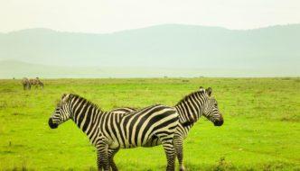 Safari in Ngorongoro Crater Tanzania