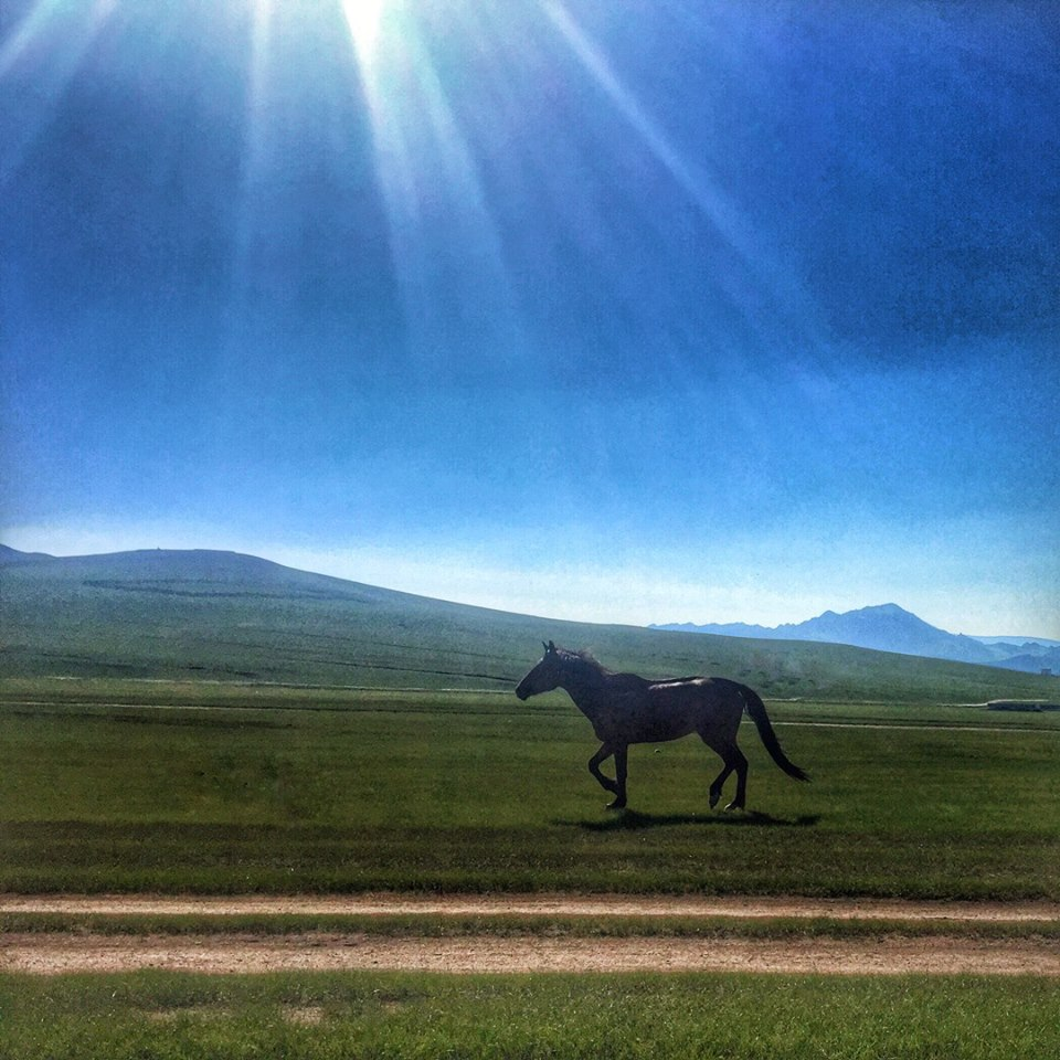 Simply Travelled Mongolia Horse