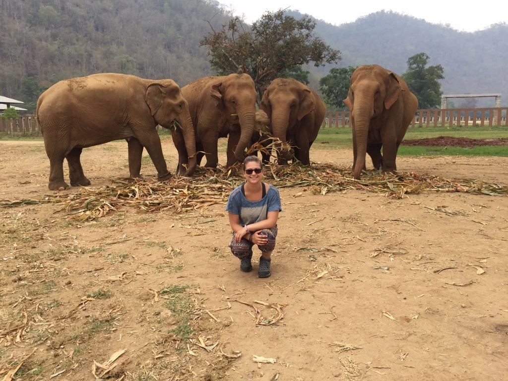 Elephant nature park- Thailand