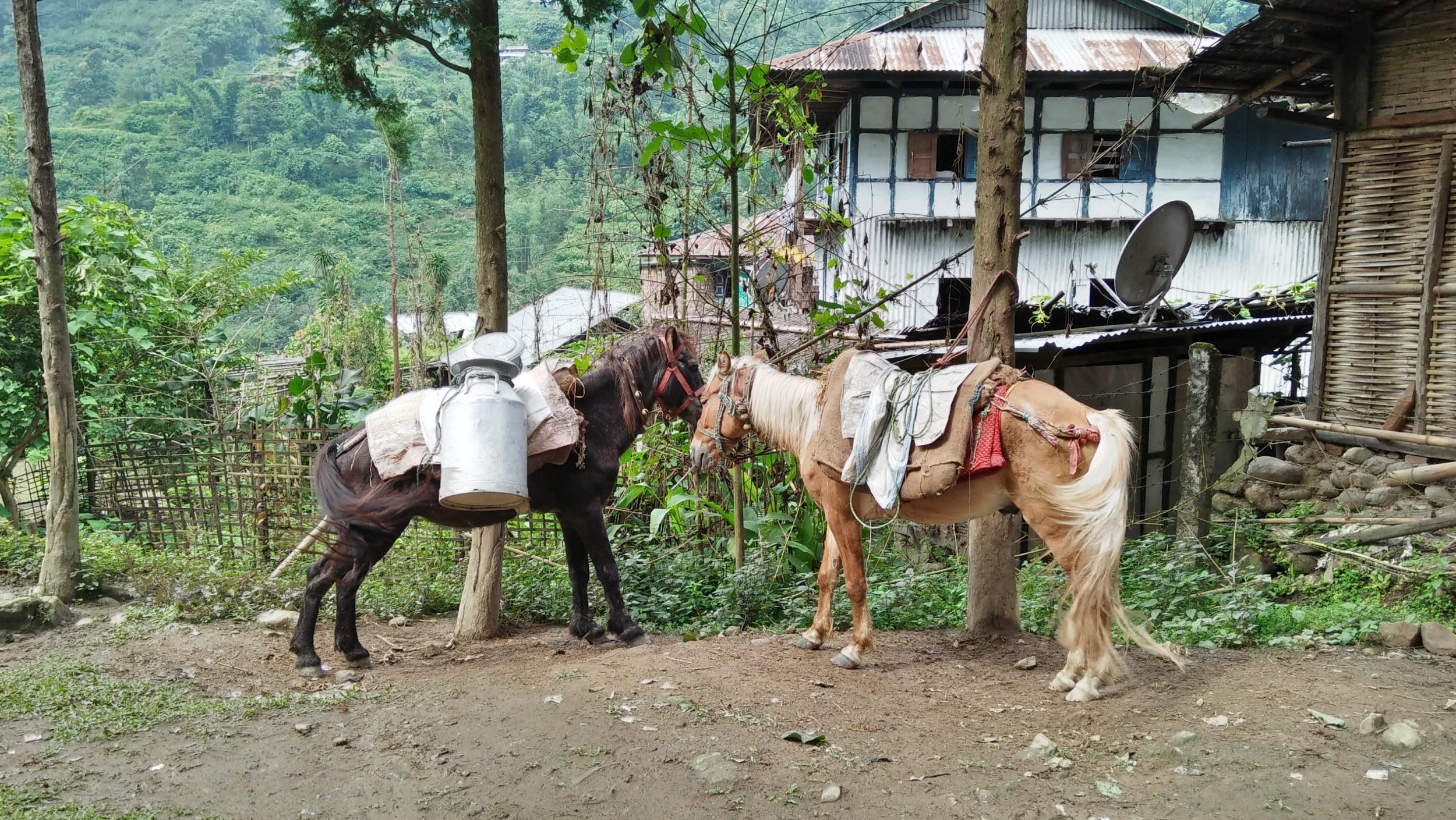 Nepal Road Trip Vagabond Way