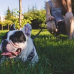Benefits of Pet Sitting and Travel
