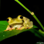 Kubah National Park A Frog Lovers Dream Borneo Malaysia
