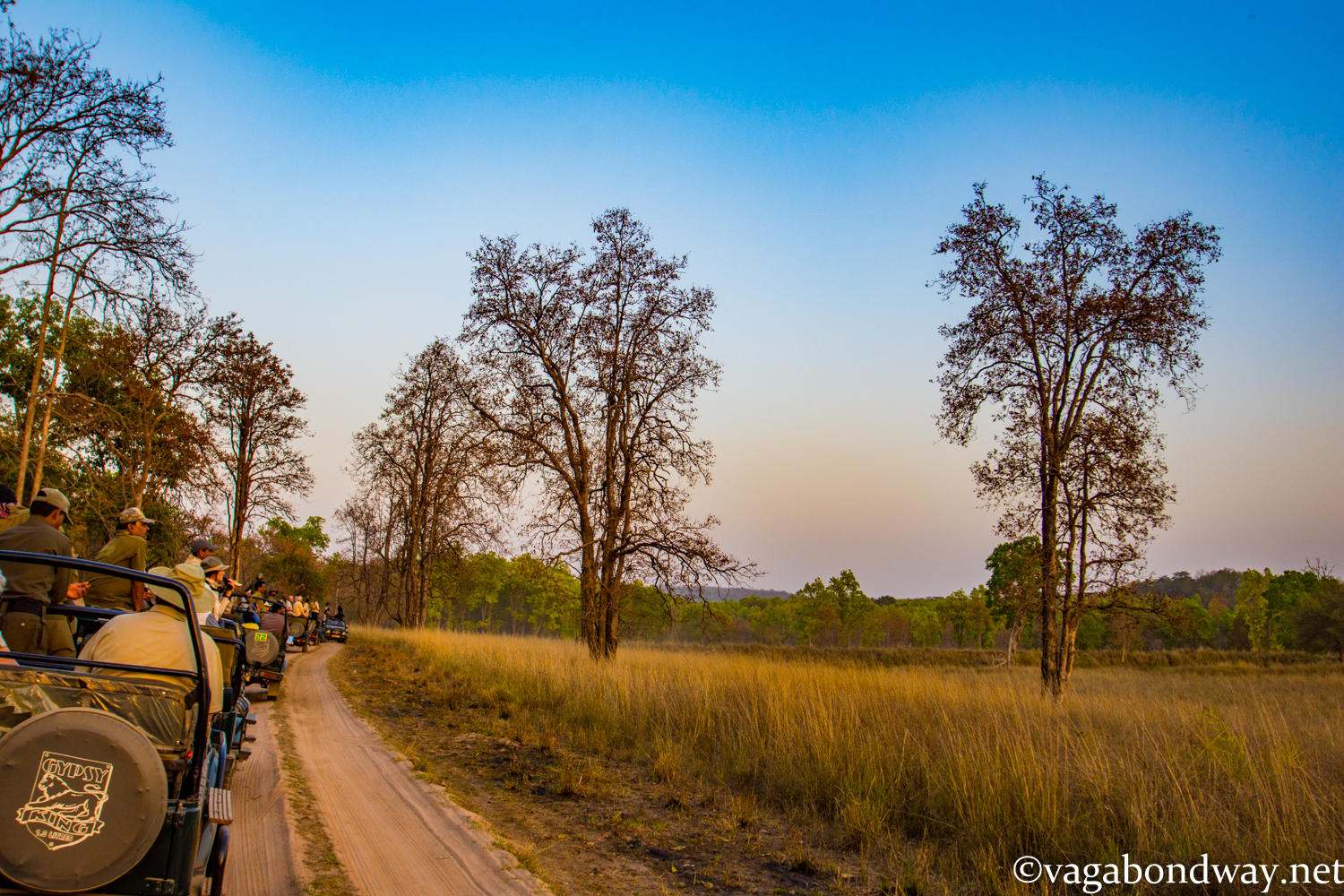 Kanha India Vagabond Way