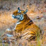 How to Safari in Kanha National Park India looking for Tigers