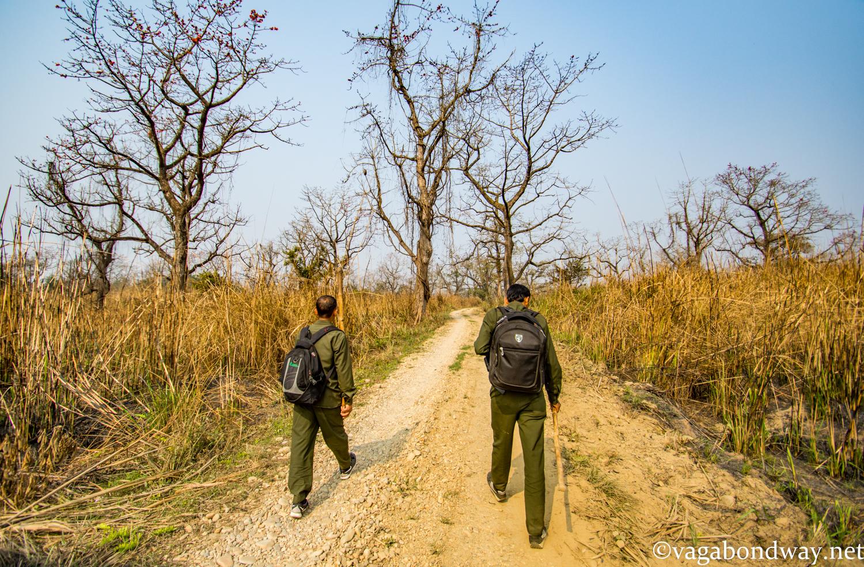 Rhinos Nepal Vagabond Way