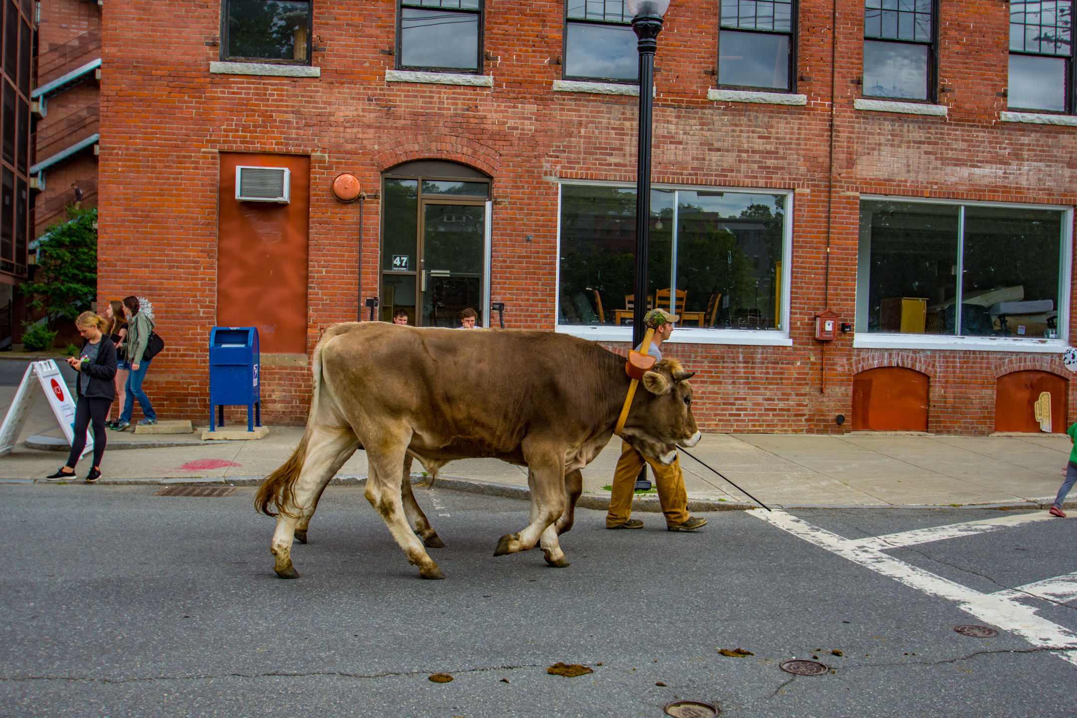 Strolling of the Heifers