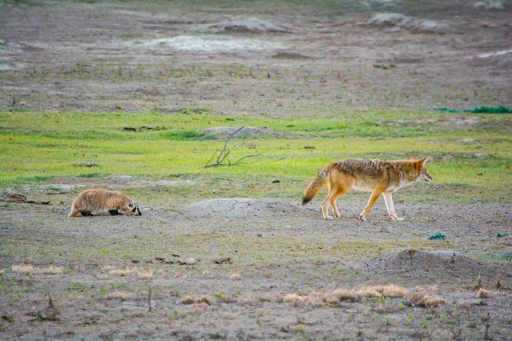 theodore roosevelt national park vagabond way